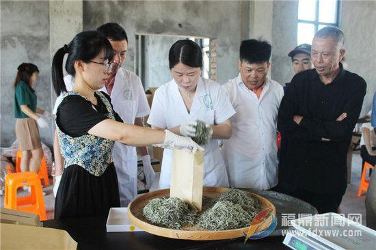 中国•特色小镇(点头)第四届福鼎白茶斗茶节将于6月10开启